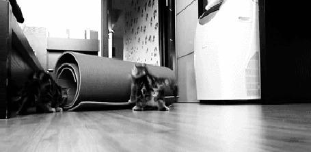 Анимация Кот играется со свернутым ковриком