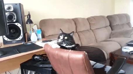 Анимация Кот заслушался хард роком и танцует на кресле