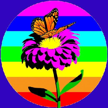 Анимация Бабочка сидит на цветке на фоне радужного круга