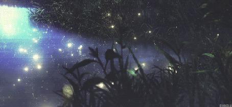 Анимация Ночные светлячки над травой