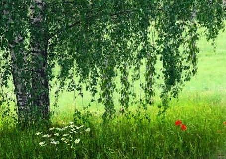 Анимация Цветы в поле под зеленой березой