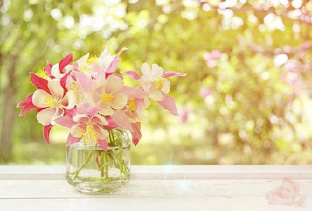 Фото девушка на поле с хризантемами