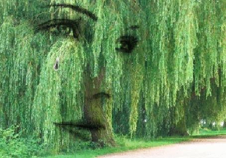 Анимация Лицо девушки в ветвях ивы с капающей слезой