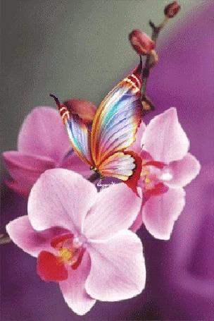 Анимация Сверкающая бабочка на розовой орхидее