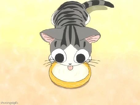 Анимация Котенок Чии лакает молоко, аниме Chis Sweet Home / Милый дом Чи