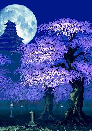Анимация Цветущая сакура под полной луной в парке