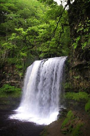 Анимация Водопад в летнем лесу