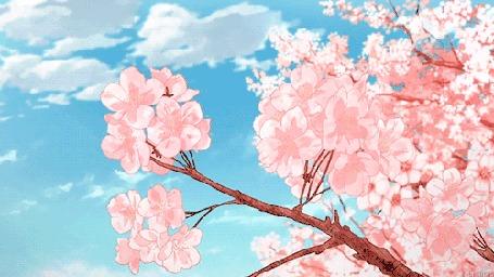 Анимация Весенняя ветка на фоне неба