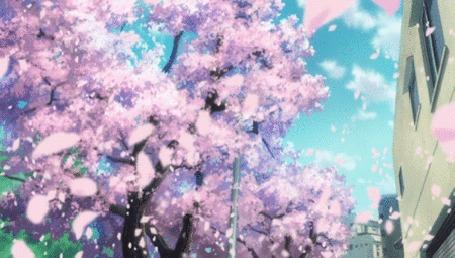 Анимация С сакуры облетают лепестки, аниме 5 сантиметров в секунду