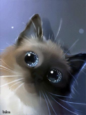 Анимация Сиамский котик со сверкающими и моргающими глазами шевелит ушами, автор biku