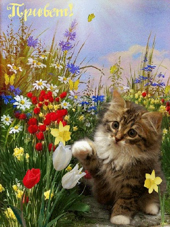 Анимация Котенок сидит на тропинке среди цветов, летают бабочки, падают лучи солнца, (Привет! )
