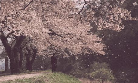 Анимация Мужчина стоит на холме рядом с деревьями сакуры
