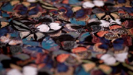 Анимация Много лежащих бабочек на земле, некоторые из них взлетают вверх