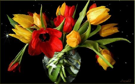 Анимация Желтые и красные тюльпаны в вазе с водой, by Эльза68