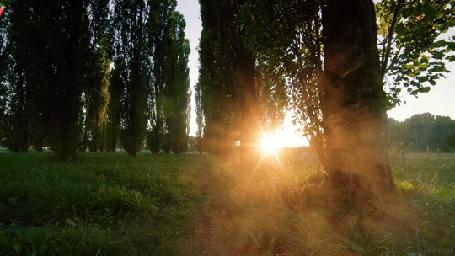 Анимация Яркое солнце освещает природу