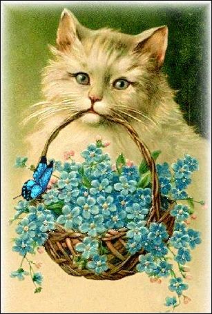 Анимация Кот с корзиной незабудок и бабочкой на них