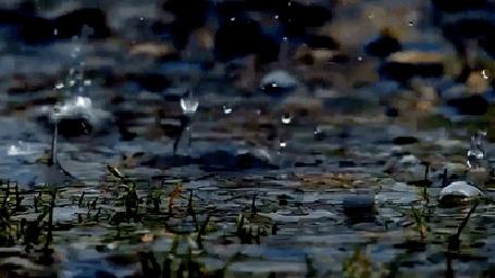 Анимация Капли дождя падают на воду