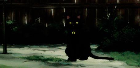 Анимация Появляющийся черный кот