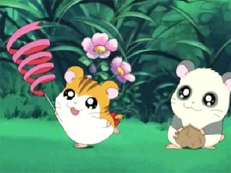 Анимация Хомячок Хомячок Таро / Taro наблюдает за тем, как танцует с лентой его подруга