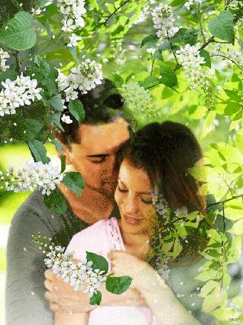 Анимация Мужчина и женщина обнимают друг друга в ветках цветущей черемухи