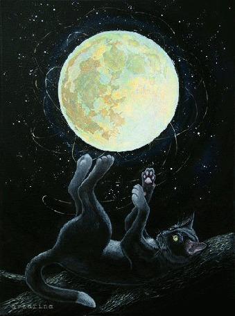 Анимация Черный кот играет с Луной