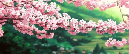 Анимация С весенней цветущей ветки слетают лепестки