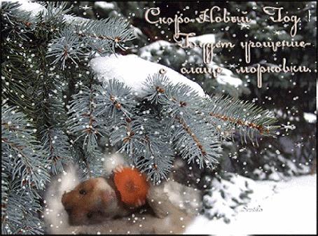 Анимация Веселый хомяк лежит под снежной елкой и ест морковку (Скоро Новый Год! Будет угощение - слаще морковки) , автор Svetilo