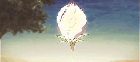 Анимация Распускающийся белый цветок, Мастер Меча / Master of the Sword