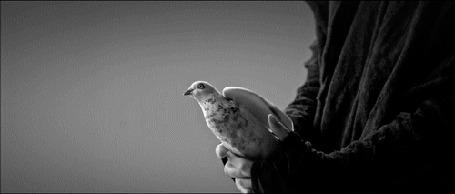 Анимация С рук парня вылетает голубь