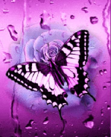 Анимация Порхающая цветная бабочка