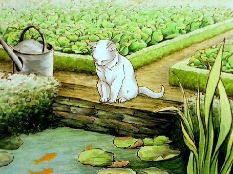 Анимация Белый кот сидит и смотрит на рыбок