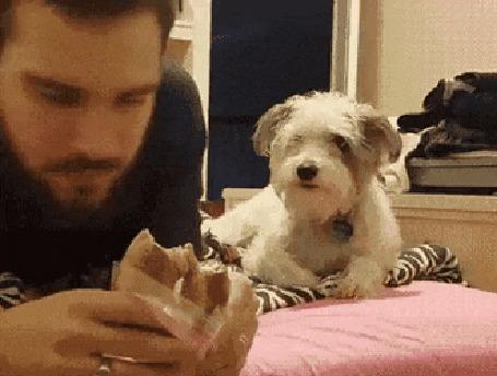 Анимация Собака делает вид, что не замечает того, что хозяин ест