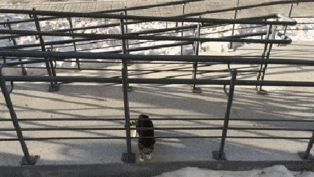 Анимация Кошка взбирается с улицы в окно