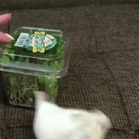 Анимация Хомячок рвется достать из коробки вкусный салат