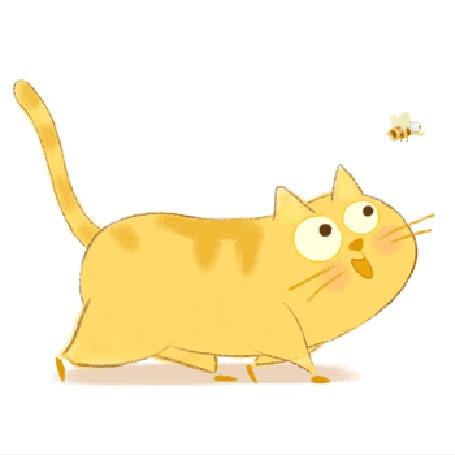 Анимация Любопытный рыжий кот идет за летящей пчелой