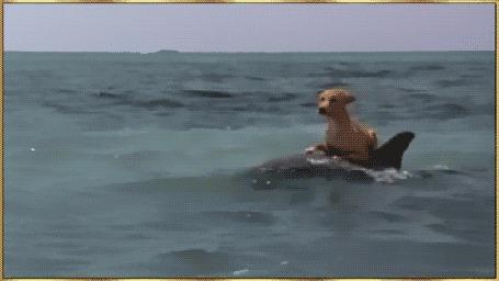 Анимация Собака верхом на дельфине плывет по морю