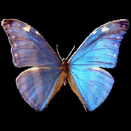Анимация Порхающая голубая бабочка