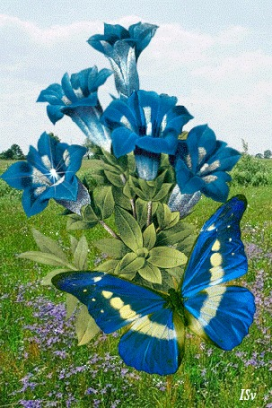 Анимация Голубая бабочка на цветке