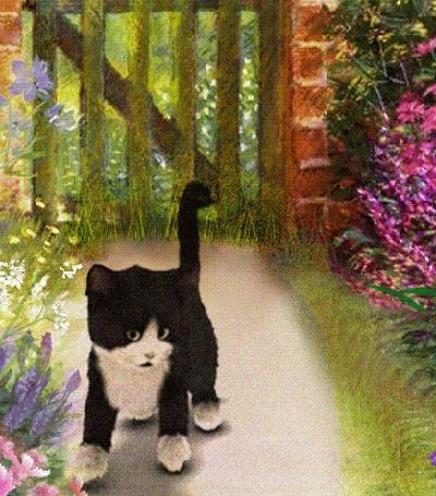 Анимация Кот гоняется за мышкой на дорожке