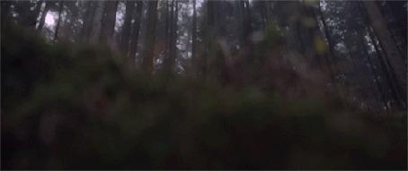 Анимация Свечение на траве в лесу