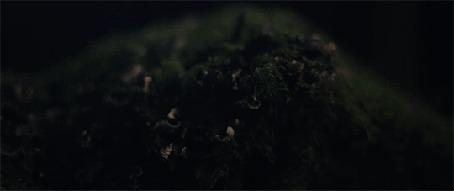 Анимация Свечение на траве