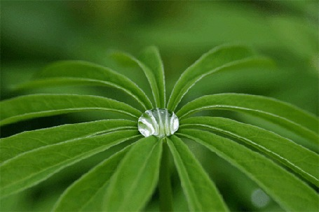 Анимация Капелька росы переливается на зеленом растении