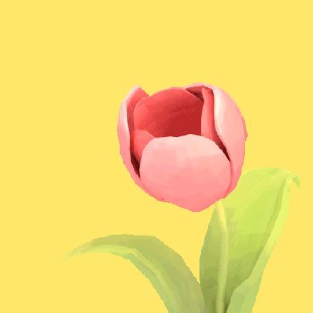 Анимация Пчела залетает в тюльпан