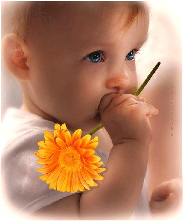 Анимация Маленький синеглазый мальчик с оранжевым гербером в руке