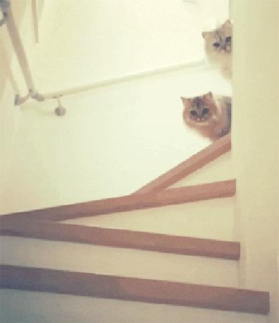 Анимация Две пушистые кошки выглядывают из за угла на лестнице
