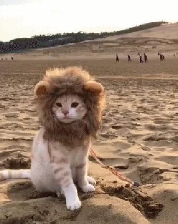 Анимация Кот с гривой ходит по песку
