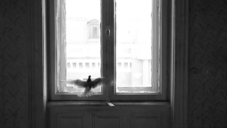 Анимация Голубь бьется в окно, пытаясь вылететь на улицу