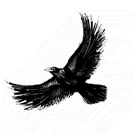 Анимация Летящий на белом фоне черный ворон