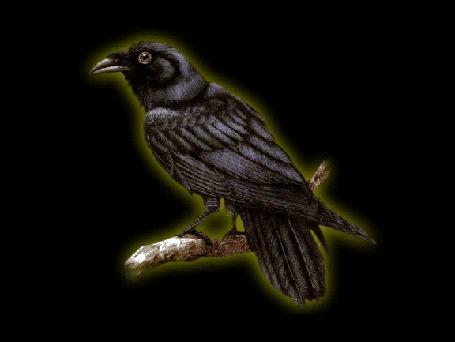 Анимация Черный ворон сидит на ветке на черном фоне
