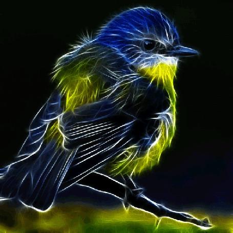 Анимация Птичка из световых лучей часто дышит